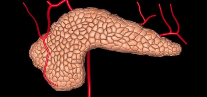 Bauchspeicheldrüse und Arterien