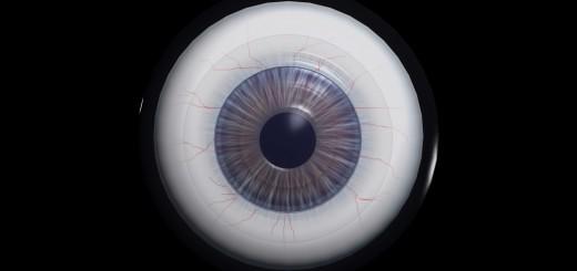 Auge Frontalansicht