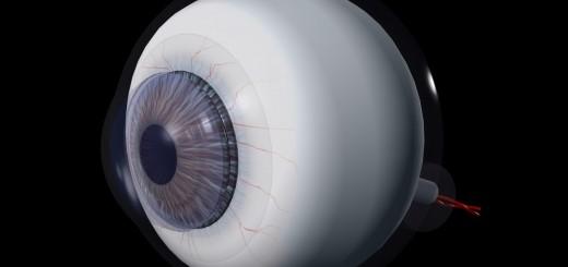 Auge Seitenansicht