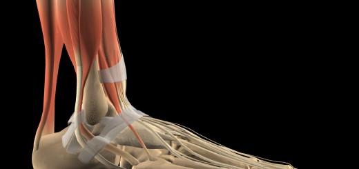 Fußskelett mit Bändern und Sehnen Seitenansicht