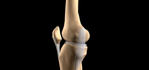 Kniegelenk mit Bändern von der Innenseite