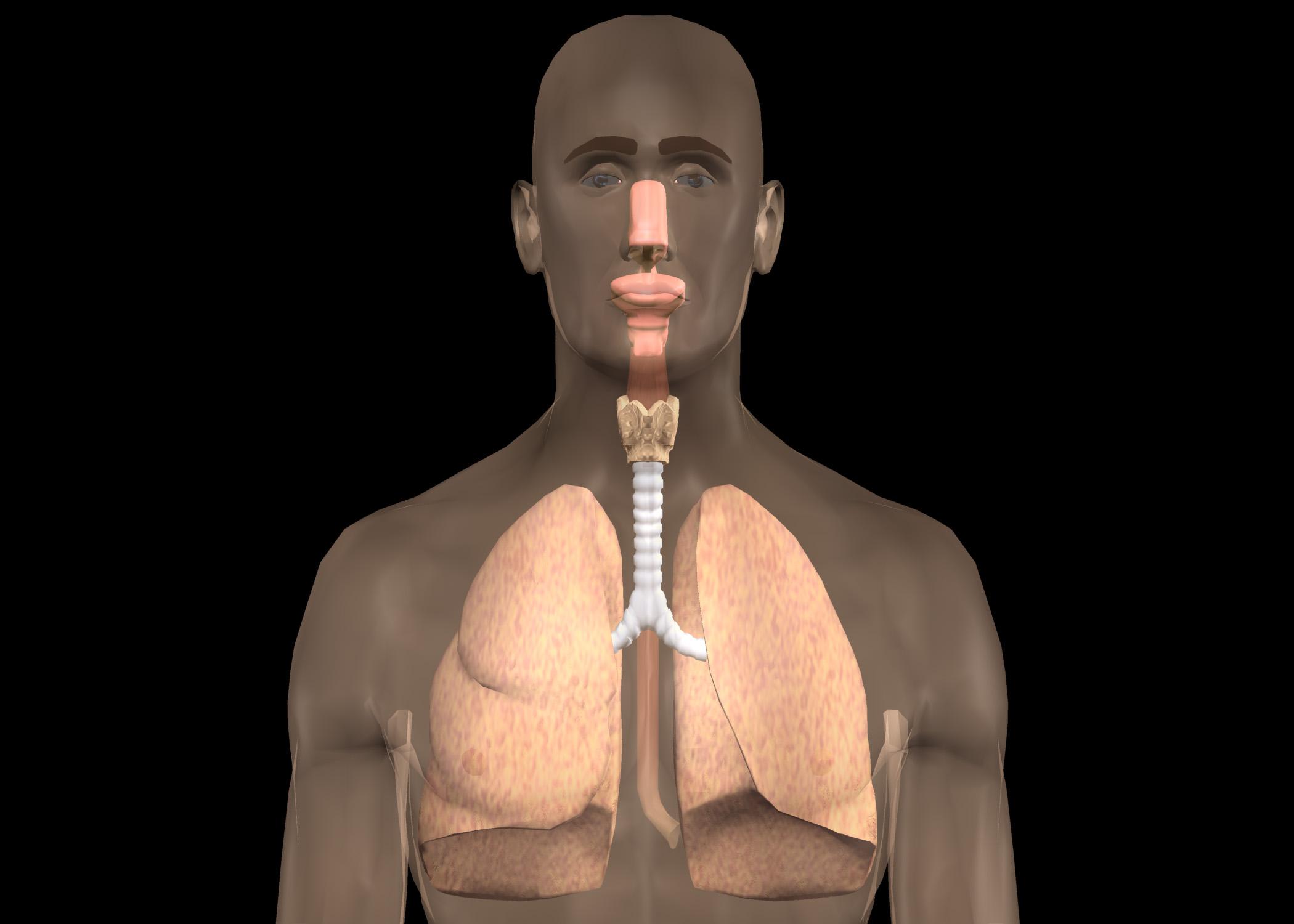 Luftröhre (Trachea) - Gesundmed – Medizin und Gesundheit im Web