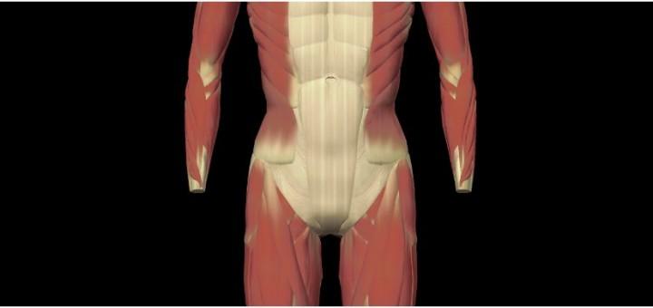 Leistenkanal (Canalis inguinalis) - Gesundmed – Medizin und ...
