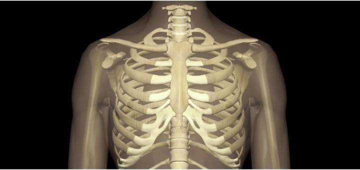 Schlüsselbein (Clavicula) - Gesundmed – Medizin und Gesundheit im Web