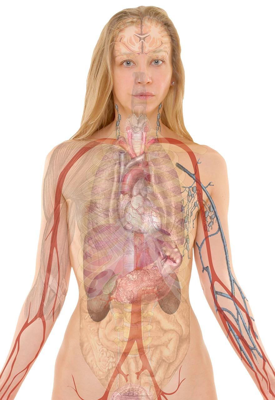 Thorakoskopie - Gesundmed – Medizin und Gesundheit im Web