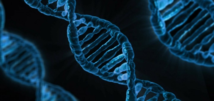 DNA-Strang des Menschen