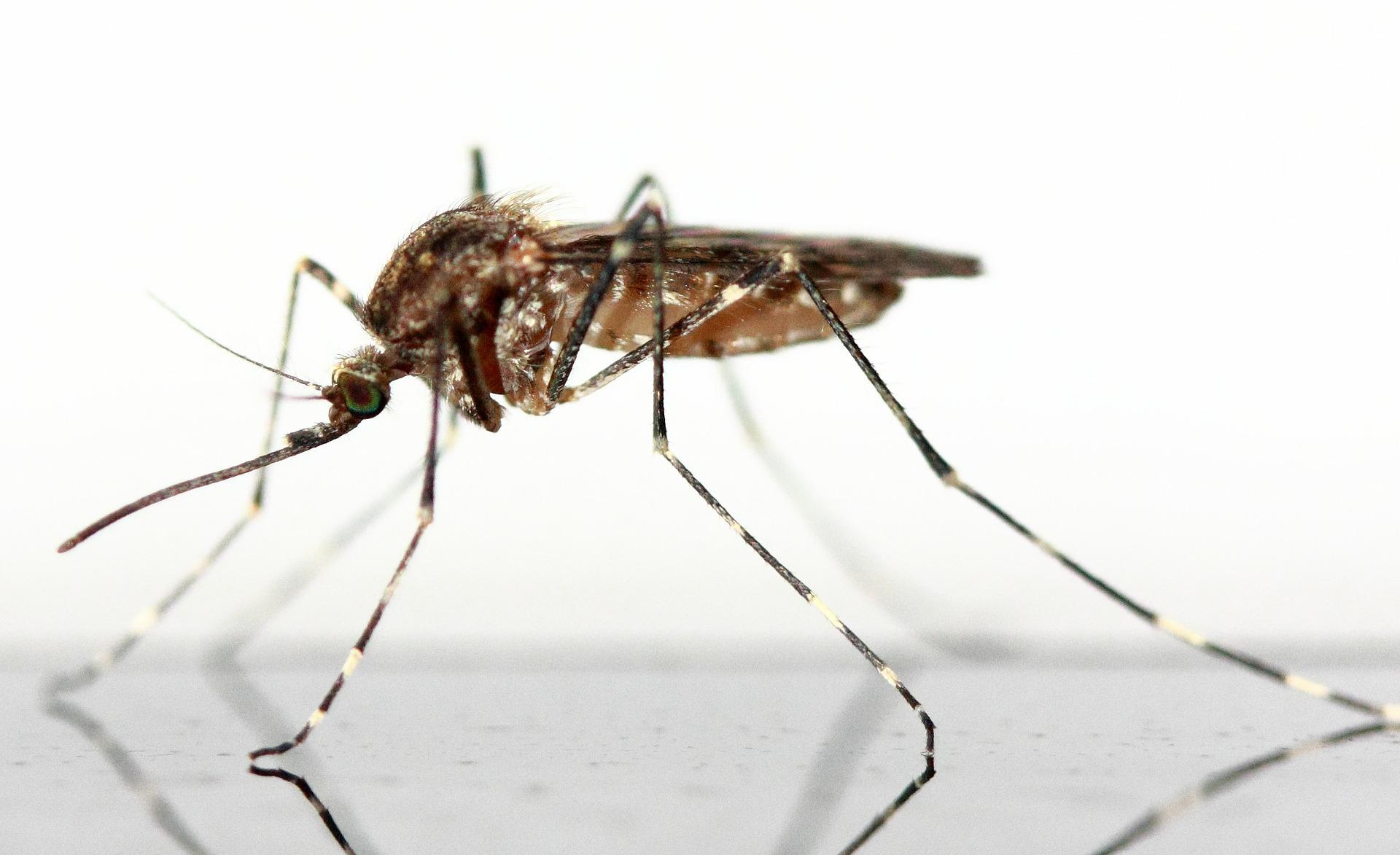 Die wichtigsten Fragen zum Zika-Virus - Gesundmed – Medizin und ...