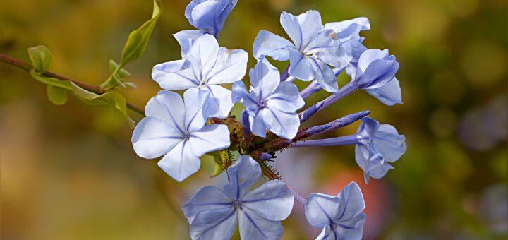 Blüte (Foto: Pixabay.com)