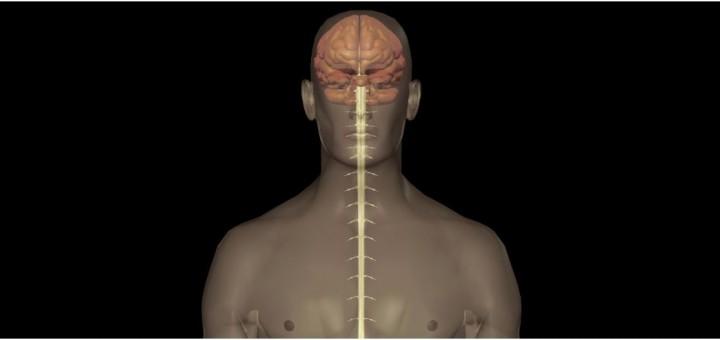 Rückenmark